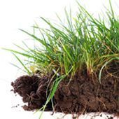 Boden- und Rasenanalyse
