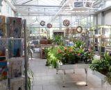 Zimmerpflanzen bei Bendick in Mettingen