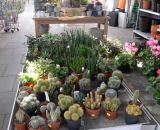 Zimmerpflanzen und Kakteen bei Bendick in Mettingen