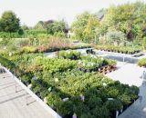 Pflanzen in Baumschulqualität bei Bendick in Mettingen