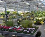 Frühblüher und Gartenstauden bei Bendick in Mettingen
