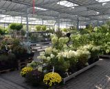 Große Pflanzenausstellung bei Bendick in Mettingen