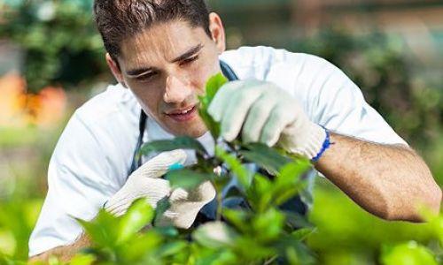 Profi - Pflanzenschutzberatung