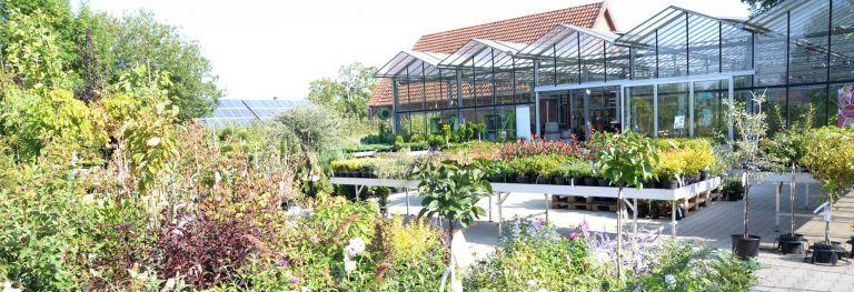 Baumschulpflanzen bei Bendick in Mettingen